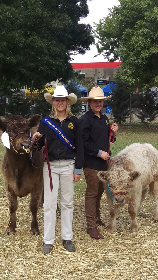 Canberra Cattle Team